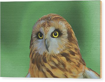 Short Eared Owl On Green Wood Print by Dan Sproul