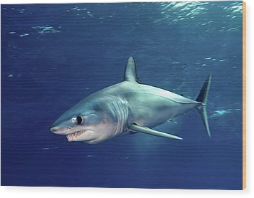 Shortfin Mako Sharks Wood Print by James R.D. Scott