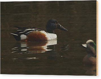 Wood Print featuring the photograph Shovel Tail And A Wigeon by Jeff Swan