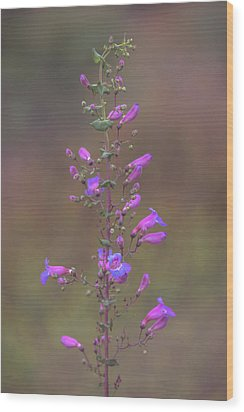 Wood Print featuring the photograph Showy Penstemon by Alexander Kunz