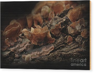 Wood Print featuring the photograph Shrooms by Kim Henderson