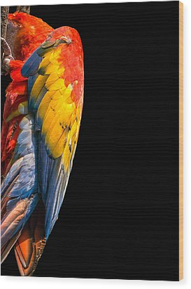 Wood Print featuring the photograph Shy Macaw by Rob Amend