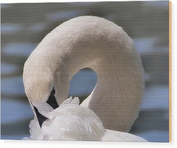 Wood Print featuring the photograph Shy Swan by Elaine Manley