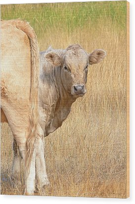 Shy White Calf Wood Print by Jennie Marie Schell