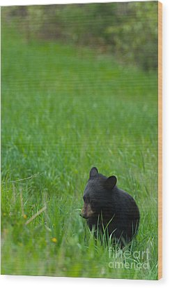 Shyness Wood Print by Birches Photography