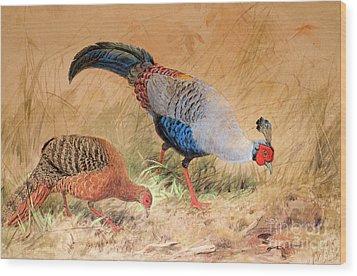 Siamese Pheasant  Wood Print
