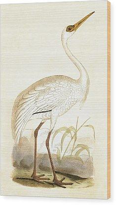 Siberian Crane Wood Print by English School