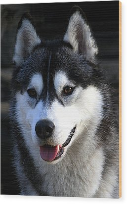 Siberian Husky Wood Print by Doug Mcrae