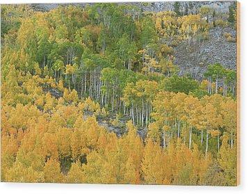 Sierra Autumn Colors Wood Print