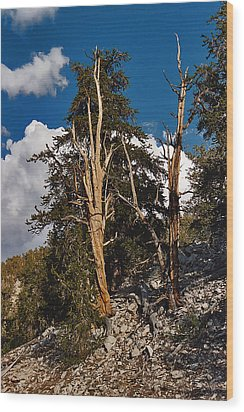 Wood Print featuring the painting Sierra Cedar by Larry Darnell