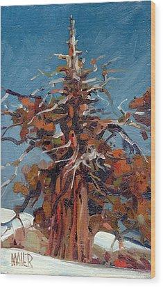 Sierra Juniper Wood Print by Donald Maier
