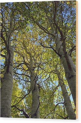 Sierra Nevada Aspen Fall Color Wood Print by Scott McGuire