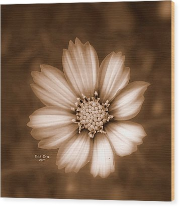 Silent Petals Wood Print by Trish Tritz