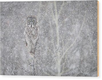 Wood Print featuring the photograph Silent Snowfall Landscape by Everet Regal
