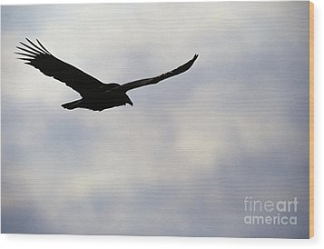 Silhouette Of A Turkey Vulture  Wood Print by Erin Paul Donovan