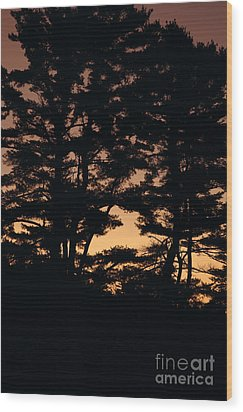 Silhouette Of Forest  Wood Print by Erin Paul Donovan