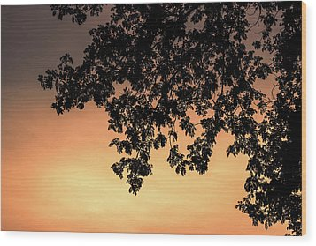 Silhouette Tree In The Dawn Sky Wood Print