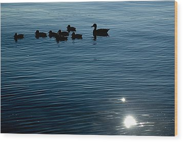 Silhouetted Duck Family Swims Wood Print by Todd Gipstein