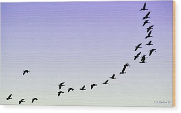 Silhouetted Flight Wood Print by Brian Wallace