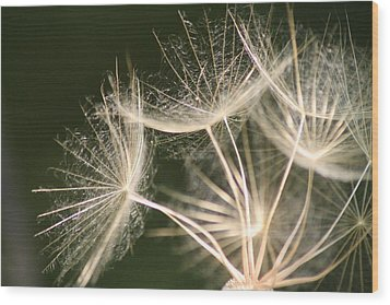Silken Seed Parachutes Wood Print by Peg Toliver