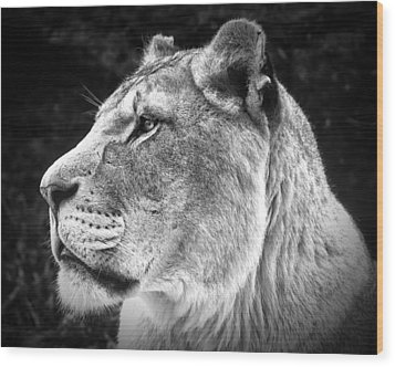 Wood Print featuring the photograph Silver Lioness  by Chris Boulton