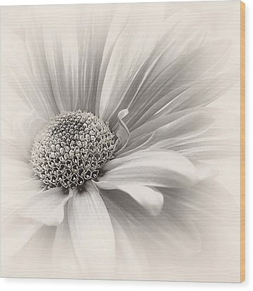 Wood Print featuring the photograph Silver Mist by Darlene Kwiatkowski