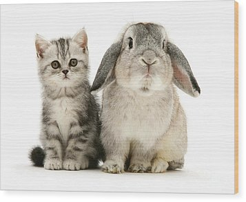 Silver Tabby And Rabby Wood Print