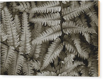 Silvery Ferns Wood Print