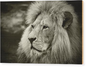 Wood Print featuring the photograph Simba by Stefan Nielsen