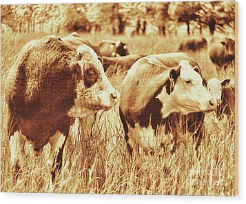 Simmental Bull 3 Wood Print