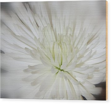 Simple Beauty Wood Print by Shannon McMannus