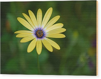 Simple Flower Wood Print by Jennifer Englehardt