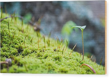 Simple Sprout Wood Print