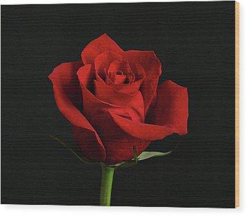 Simply Red Rose Wood Print by Sandy Keeton