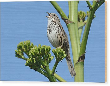 Wood Print featuring the photograph Sing A Song by Fraida Gutovich