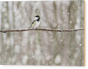 Sing Chickadee Sing Wood Print by Angie Rea