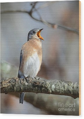Singing This Song For You Wood Print by Amy Porter