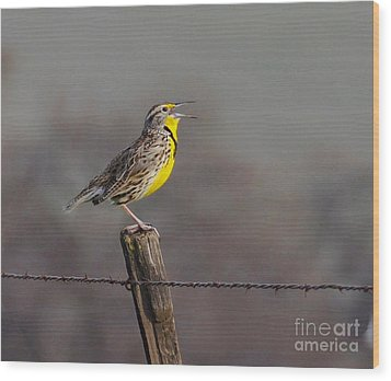 Wood Print featuring the photograph Singing Warbler by Debby Pueschel
