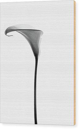Single Cala Tall Black And Whte Wood Print by Rebecca Cozart