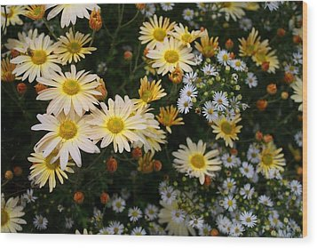 Wood Print featuring the photograph Single Chrysanthemums by Kathryn Meyer