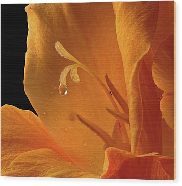 Wood Print featuring the photograph Single Drop by Jean Noren