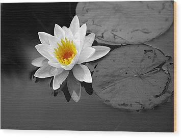 Wood Print featuring the photograph Single Lily by Shari Jardina