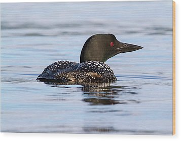 Single Loon Wood Print