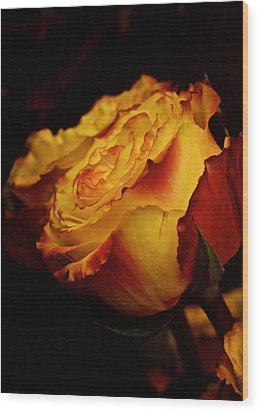 Wood Print featuring the photograph Single March Vintage Rose by Richard Cummings