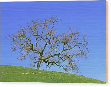 Wood Print featuring the photograph Single Oak Tree by Art Block Collections
