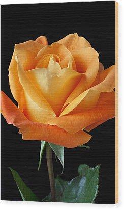 Single Orange Rose Wood Print by Garry Gay