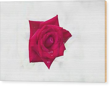 Single Red Rose Wood Print
