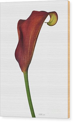Single Rust Calla Lily Stem Wood Print