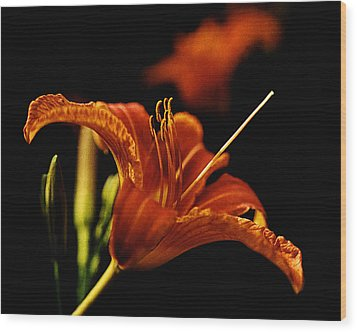 Single Tiger Lily Wood Print