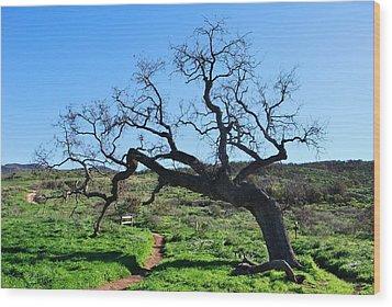 Single Tree Over Narrow Path Wood Print